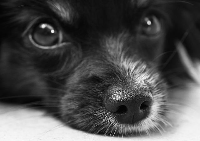 Co dělat, když vašeho psa napadne agresivní pes?