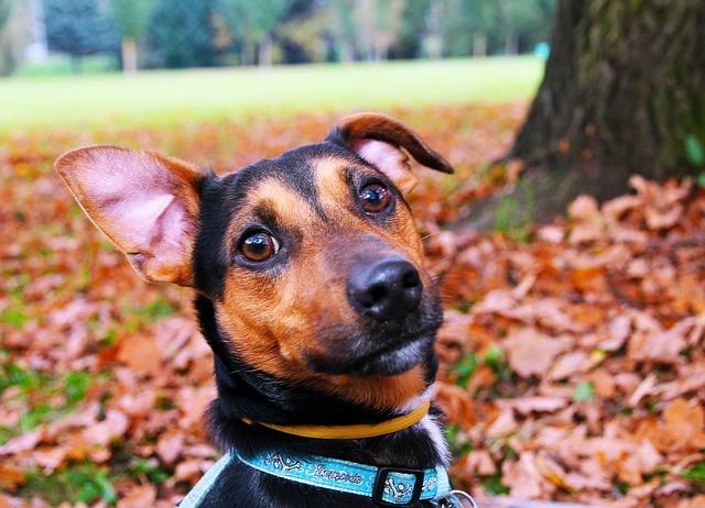 Nechcete, aby se váš pes ztratil? Kupte mu obojek