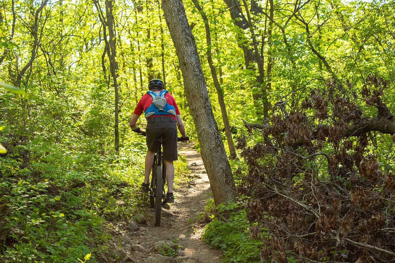Mountain Bike Cycling Exercise  - jotoya / Pixabay